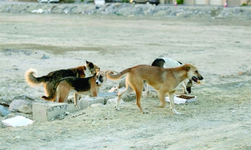 stray dogs in bahrain