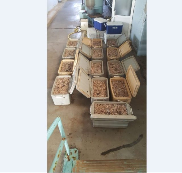Bahrain: Half A Ton Of Illegal Shrimp Seized