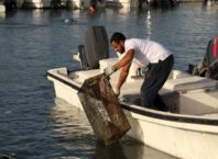 A total of 800 kilos of marine pollutants were removed from Sitra Seaport