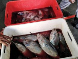 Bahrain: Beware Of Rotten Fish Being Sold, 150kgs Of Putrid Fish Seized